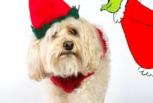 christmas dog photography
