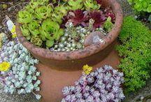 Container Gardening / by Jane Weimer