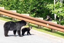 Stowe Wildlife