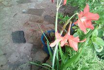 Plantas do meu jardim