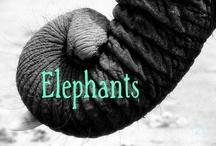 Elephants... / by Nancy D'Emilio