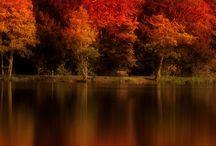 Autumn / The colors of autumn