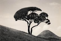 Photographer - Michael Kenna
