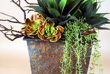 Great Potted Succulents!