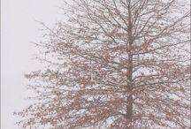 Winter ❄️❄️