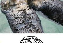 Animals!!!! / by Brooke Hammond