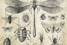 ilustração científica