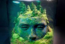 Jar Forest
