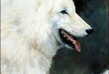 Wolven / wolves / loups