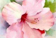 watercolour single hibiscus