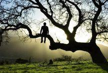 peace,nature