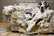 Cães - Cachorros - Dogs - Perros - Chien