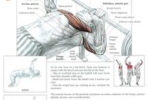 Workout chest, shoulders, triceps, trapezius, buikspieren
