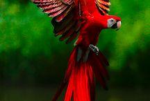 Vogels / Alle vogels