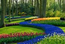 Beautiful Gardens / by Catherine J. MacIvor