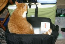 """Cats in the Bag / As a house call practice, we take some bags of gear into our client's homes.  Some of them have treats and catnip inside...which leads to...""""Cats in the Bag!"""""""