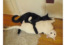 Cats Doing Human Things