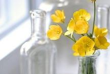 Flors / Flores / Flowers