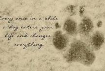 Pets / by Elizabeth Tranchant