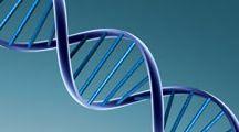 Genetica / Genetica Medica, Citogenetica Classica e Molecolare, Genetica Forense, Genetica Oncologica, Studio delle Malattie Metaboliche Ereditarie, Infettivologia Molecolare, Malattie genetiche in utero.