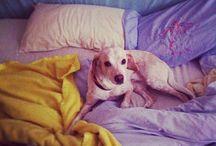 Kiko! / he's too cute not to share! / by Liz // Queen Lila