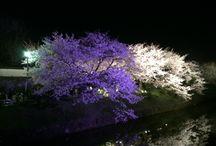 日本の景色 / あちこちの日本の心温まる景色をアップ!