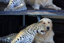 Animals love each other