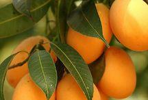 gyümölcsök,termések