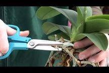 Orchideen umtopfen selberziehen