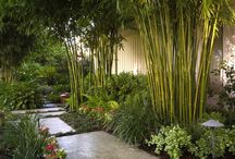 κήπος  garden