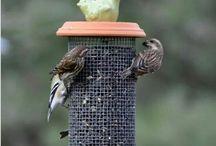 Fugler i hagen