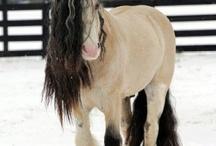 Horses / by Mandi Michael