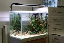 Planted aquascapes