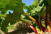 zelenina,ovoce a rady