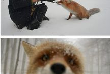 Internet is also for Foxes :D