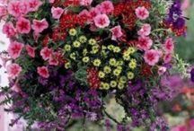 Hanging baskets with flowers