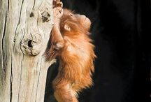 Primates / by Brittany Chase