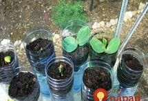 pěstování rostlin