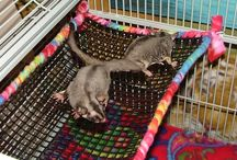 Sugar Gliders / by Sell B