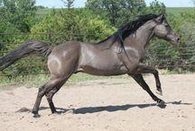 Horses/Tack