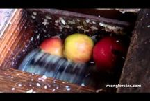 Making (Hard) Apple Cider / by Emma Wolfer