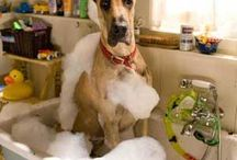 dog's in the bath!