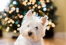 Holiday Dog Photos / by Steph Zimmerman