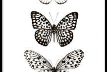 Fjärilar