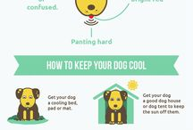 Dog Days of Summer / Tips to keep you pup cool this summer.
