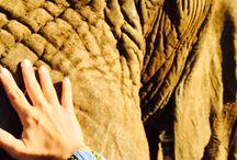 Coleçao Africa / Coleção inspirada na Africa do Sul  www.rvicintin.com.br