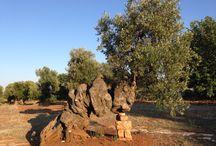 alberi secolari