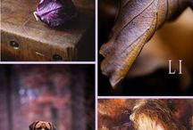 Purple&Brown
