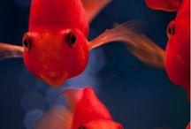 Digital Aquarium / Fish n moe fish / by David Baur-Ray