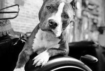 Koirat ja muut eläimet